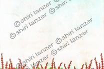 13 - שדה פרחים